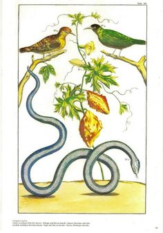 Birds, Snake and a Plant from the Albertus Seba Cabinet of Natural Curiousities, commissioned in 1731