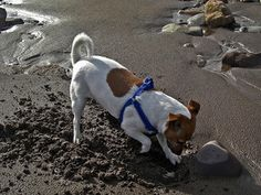 The Best Way to Keep Your Own Dog from Digging