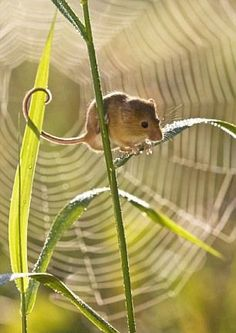 field-mouse_6