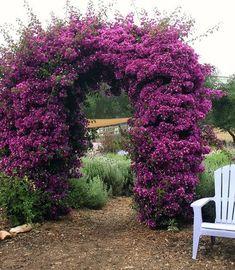 Spectacular arbor   // Great Gardens & Ideas //