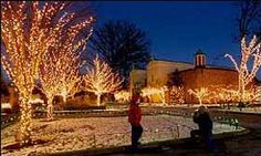The Lights Before Christmas    The Toledo Zoo
