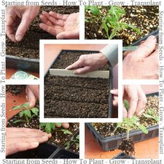 Starting from Seeds – How to Plant – Grow – Transplant  Many new gardeners may become intimidated about the process of starting from seeds but this article can help get over that reluctance feeling.