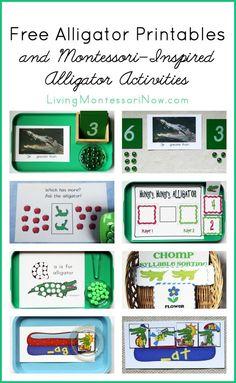 Free Alligator Printables and Montessori-Inspired Alligator Activities