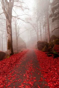 Red Mist, The Enchanted Wood