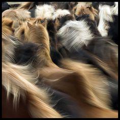 Horse Blur