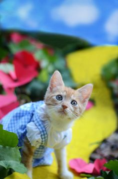 Kittens Play Dress-Up to Find Forever Homes