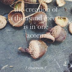 """""""The creation of a thousand forests is in one acorn."""" - Emerson"""