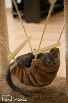 omg my 2 favorite things...cats and hammocks!