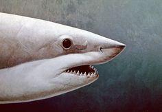 Shark exhibit at Fort Lauderdale Museum of Art