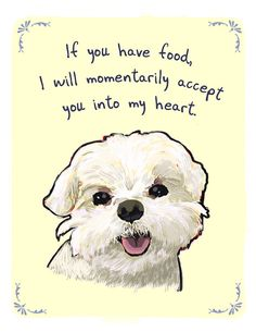 foods, maltese dogs, dog food, daisies, belle
