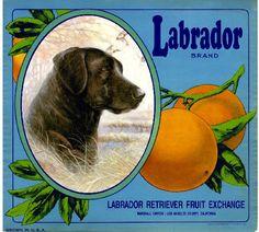 Labrador brand