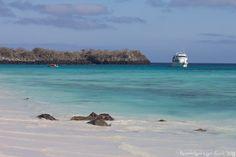 galapagos islands, galapago island