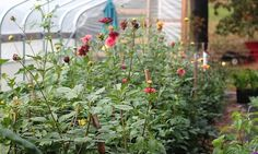 Urban Flower Farm Love in Philly