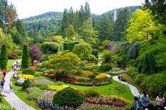 The Journey: Butchart Gardens - Victoria #butchartgardens #tbg #gardens
