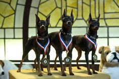 """Turbo, Axel and Diesel, The Woof Gang From """"Marley and Me, The Puppy Years"""""""