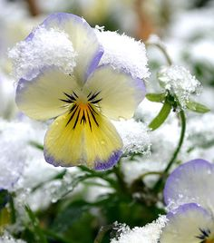 Sometimes winter holds on a little too long!    Artful Affirmations blog