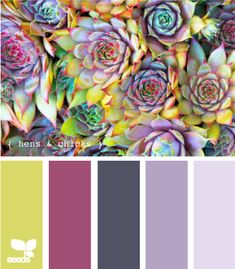 hens and chicks palette