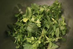 Recipe: Watercress sandwiches || Photo: Hiroko Masuike for The New York Times