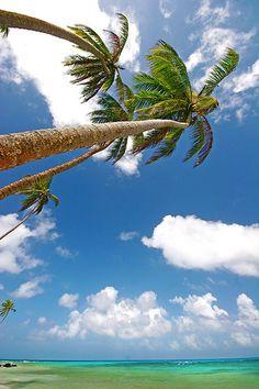 Under the Palms, Little Corn Island