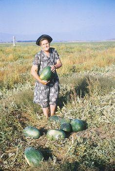 Mrs. Sjogren's Melon Time - Hemet, California by The Pie Shops Collection, via Flickr