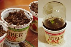 yogurt cups + baby food jars = mini greenhouse/seed starter