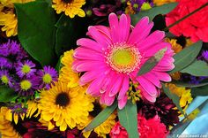 bouquet, spring flowers, ralphwaldoemerson, summer gardens, picture quotes, color, daisi, ralph waldo emerson, flower types