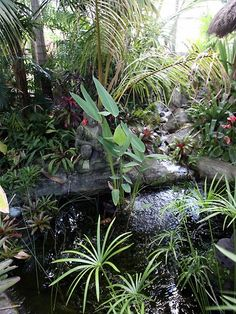Brisbanes best tropical gardens.