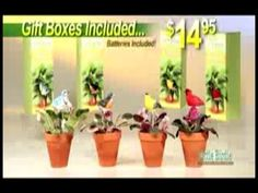 http://asseenontvblog.net/index.php/little-birdie-plant-monitor-as-seen-on-tv-commercial/    Little Birdie™ Plant Monitor - Handcrafted Birds Sing When Plants Need Water!    #video #asseenontv #asotv #littlebirdie #plantmonitor #singingbirds