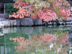 Japanese Gardens On Pinterest Japanese Gardens Koi Ponds And Gates