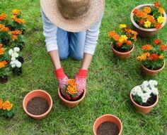 Guía de Jardinería, Que es mezcla para macetas