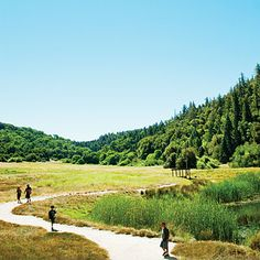Palomar Mountain, CA  Edge of San Diego Co.  Wonderful trails!