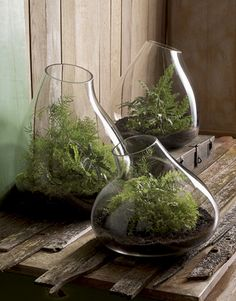 Indoor garden.  For more home ideas: www.residentialattitudes.com.au/my-portfolio/images