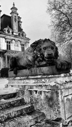 Abandoned - lion seems to be looking right at you.