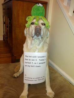 when dog shaming goes good