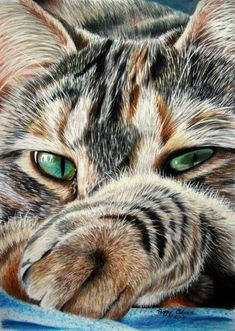 pretty cat cat art, tabby cats, anim, acrylics, green eyes, chat, kitti, colored pencils, pencil art