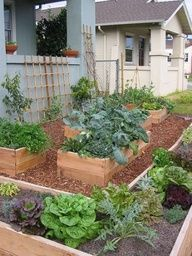 front yard edible garden