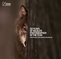 50 Years of Wildlife Photographer of the Year: How Wildlife Photography Became Art by Natural History Museum, Rosamund Kidman Cox: A celebration of 50 years of the world-famous Wildlife Photographer of the Year competition and of wildlife photography itself. #Books #Photography #Wildlife #Art