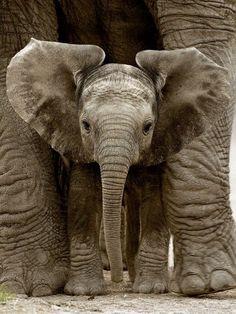 baby elephant by angela