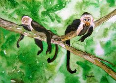 spider monkeys 25 8x10