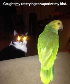 funny animals, cats, funny pics, black magic, pew pew, funni, vapor, birds, eyes