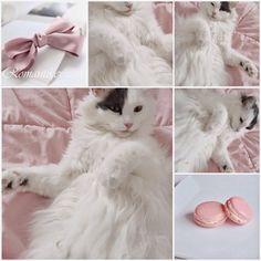 Pink macaron Pink flowers Pink princess