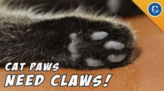 Declawing: Jackson Galaxy Just Says No! please watch this if you have a cat. very educational