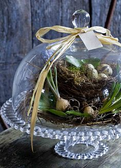 nest w/ eggs in cloche