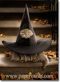 love the kittie in the witches hat!