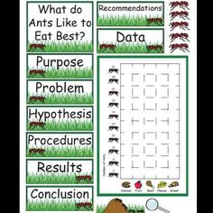 Ants Science Fair Project product from Kindergarten-Supplies on TeachersNotebook.com