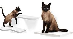 New Floating Cat Shelves From Harmony Loft