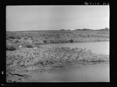 Abandoned strip coal mine leveled and planted with trees by Civilian Conservation Corps (CCC) workers. Cherokee County, Kansas 1936
