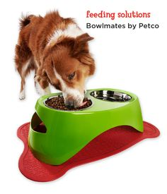 Find your feeding personality with these festive mix-and-match Bowlmates feeding sets.