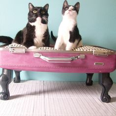 cats, cat beds, vintage suitcases, dogs, old suitcases, pet beds, dog beds, vintage luggage, little animals