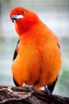Pássaro   Flickr - Compartilhamento de fotos!